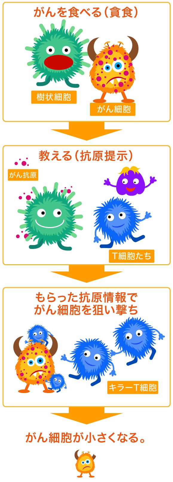 樹状細胞の働き